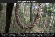 Creepy Places on Earth - Aokigahara Forest Talk Cock Sing Song