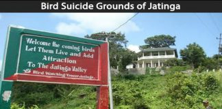 Creepy Places on Earth - Bird Suicide Grounds of Jatinga Talk Cock Sing Song